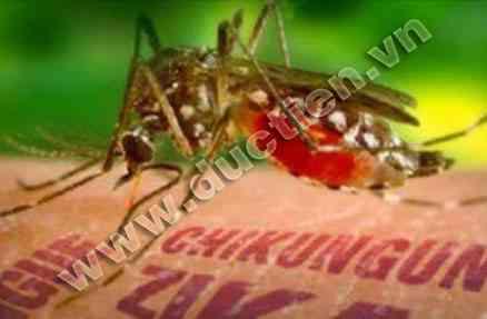 Muoi Zika